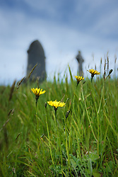 Flowers in cemetery at Kildownet, Achill Island, County Mayo, Ireland