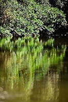 Lush green jungle reflects on the calm waters of the Batang river on the way to Nanga Sumpa Longhouse, Sarawak.