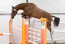 084 - Ealba VDL<br /> KWPN Paardendagen - Ermelo 2012<br /> © Dirk Caremans