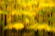 Yellow Forest #3, Watchtung Reservation, New Jersey