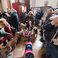 VENICE, ITALY - JANUARY 15:  Worshippers with their dogs arrive for a special service with a blessiing of  pets and animals held by Don Filippo Chiafoni Chaplain of the Church of S Francesco da Paola on January 15, 2012 in Venice, Italy. The blessing of animals and pets is a very ancient tradition dating back from San Francis of Assisi.