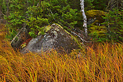 Forest edge along Witch Bay Road<br />Near Kenora<br />Ontario<br />Canada