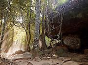 Light streaming through trees in the forest on Kulen Hills, near Kbal Spean, Cambodia