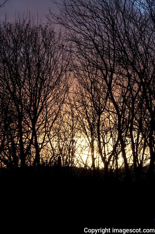 Sunrise, winter woodland