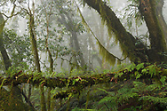 Cloud forest in the Yushan National Park, Taiwan. I was carrying out field work for a major grant from the National Geographic Society. After two days of hiking along a wonderful trail, I got here. Very humid, wet, quite cold and very steep!...