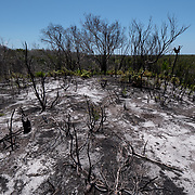 A burned clearing of a devastated forest near his village. The fire in this forest was intentionally set by a man who wanted to log the forest and was rejected by the village so her burned it instead. Madagascar