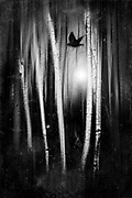 Abstract forest in backlight with a flying bird - black and white image