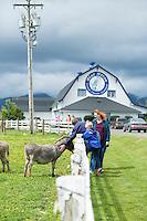 Farm animal petting zoo at the Blue Heron Cheese Company. Tillamook, Oregon.