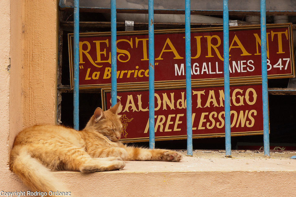 A cat naps on a window advertising a restaurant and tango lessons at Caminito street, in La Boca neighborhood of Buenos Aires, Argentina.<br /> Caminito is a pedestrian street created in the late 1950s by local painter Benito Quinquela Martín and other artist friends to recreate a version of the old immigrant neighborhood of La Boca, using wood and corrugated zinc painted in bright colors. Today, Caminito and the surrounding areas feature cafes, souvenir shops, tango dancers and other street performances aimed to attract tourists.