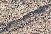 Close-up of a single track made by a Mojave desert sidewinder, Crotalus cerastes cerastes, showing the impressions of the snake's belly scales. Mesquite Flat sand dunes, Death Valley National Park, California