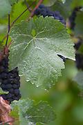leaf eguisheim alsace france