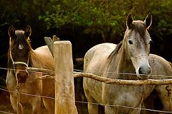 Cavalos na mangueira. FOTO: Jefferson Bernardes/Preview.com