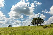Oaks basking in sunshine on a hillside in high summer, Donald Park. Photo taken in the Dane County park near Mt. Horeb on August 1, 2017.