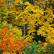 Fall colors in Charlevoix, Quebec. Canada.
