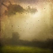 Misty landscape and sunlight - texturized photo<br /> Prints: http://society6.com/DirkWuestenhagenImagery/disturbance-GNV_Print