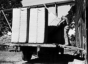 9969-2058. Loading bales of hops at Riverside Hop Farm. September 19, 1935. Riverside Hop farm, owned by A.J. Ray and Son, Inc., Newberg, Oregon.