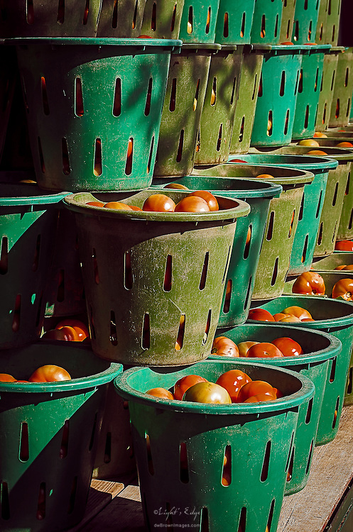 Tomatoes being off-loaded at Muth's Family Farm for boxing.
