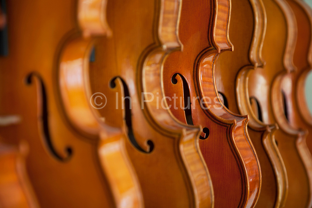 Finished volins and violas. Violins being made at viloin an cello maker, Rod Ward's studio in Guilden Morden, Hertfordshire, UK. This highly skilled craft involves the process of making from raw wood to final instrument. All hand crafted with specialist tools and care for detail.