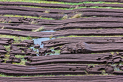 Peat harvested and laid out in strips to dry for use as a biofuel,  Leenaun, County Galway, Ireland