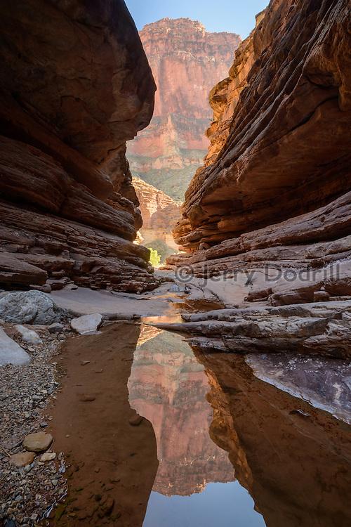 Reflections in Blacktail Canyon, a narrow canyon cut into ancient tapeats sandstone in the Grand Canyon at Colorado River mile 120. Grand Canyon National Park, Arizona