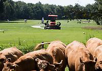 HENGELO (GLD) - greenkeeper aan het werk. maaien op golfbaan 't Zelle . COPYRIGHT KOEN SUYK