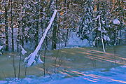 Trees at edge of creek at sunset<br />Sandilands Provincial Forest<br />Manitoba<br />Canada