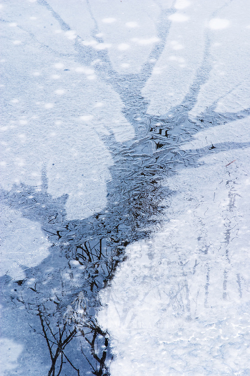 Reflections of branches emerge from the tree-shaped melting river ice. Nature has created a beautiful winter scene.