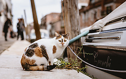 THEMENBILD - , aufgenommen am 06. Oktober 2019 in Venedig, Italien // in Venice, Italy on 2019/10/06. EXPA Pictures © 2019, PhotoCredit: EXPA/ JFK