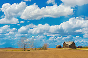 Old farmstead on th eprairie<br /> South East Alberta (near Jenner)<br /> Alberta<br /> Canada