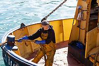 Entladen eines Trawlers im Hafen von Brixham, Devon, Großbritannien. // Unloading a trawler in Brixham harbour, Devon, Great Britain. // <br /> Déchargement d'un chalutier dans le port de Brixham, Devon, Grande-Bretagne.