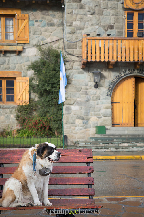 View of St Bernard rescue dog sitting on bench in Bariloche old town, Argentina