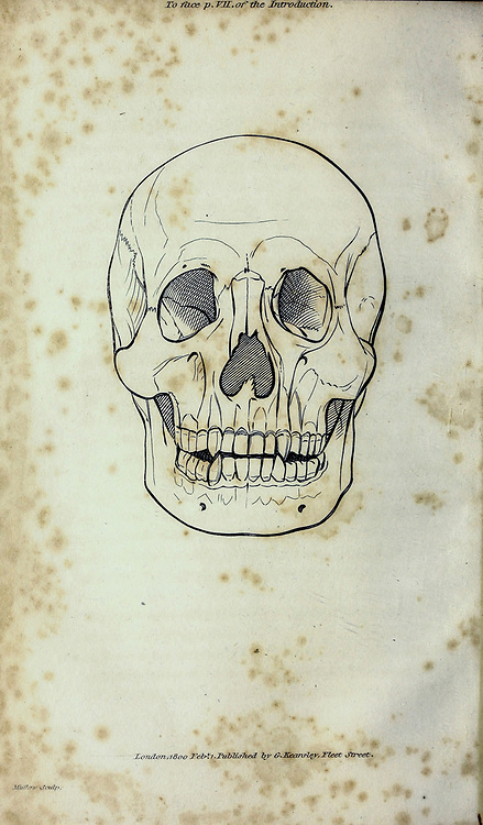 Skull from General zoology, or, Systematic natural history Part I, by Shaw, George, 1751-1813; Stephens, James Francis, 1792-1853; Heath, Charles, 1785-1848, engraver; Griffith, Mrs., engraver; Chappelow. Copperplate Printed in London in 1800