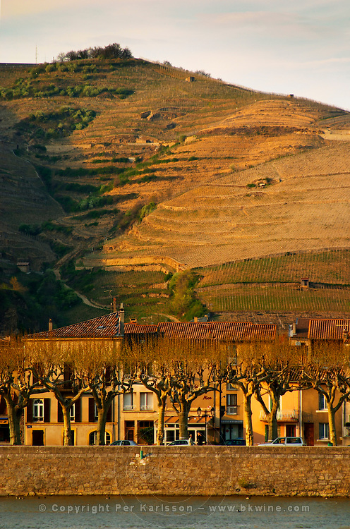 Houses and plane platane trees along the water river front. The Hermitage vineyards on the hill behind the city Tain-l'Hermitage, on the steep sloping hill, stone terraced. Sometimes spelled Ermitage. Tain l'Hermitage, Drome, Drôme, France, Europe