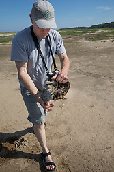 Bob Prescott Moving Horseshoe Crabs To Water (Having Missed the Tide)