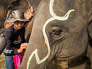 "29 AUGUST 2013 - HUA HIN, PRACHUAP KHIRI KHAN, THAILAND: A mahout (elephant handler) paints his elephant before the King's Cup Elephant Polo Tournament in Hua Hin. The tournament's primary sponsor in Anantara Resorts and the tournament is hosted by Anantara Hua Hin. This is the 12th year for the King's Cup Elephant Polo Tournament. The sport of elephant polo started in Nepal in 1982. Proceeds from the King's Cup tournament goes to help rehabilitate elephants rescued from abuse. Each team has three players and three elephants. Matches take place on a pitch (field) 80 meters by 48 meters using standard polo balls. The game is divided into two 7 minute ""chukkas"" or halves. There are 16 teams in this year's tournament, including one team of transgendered ""ladyboys.""    PHOTO BY JACK KURTZ"