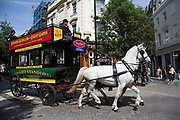 Summertime in London, England, UK. Horse-drawn omnibus giving tourists a different perspective on the tour bus. The tours which are operated on a fully restored eighteen-seater horse-drawn omnibus are the perfect way to enjoy the vibrancy of the West End. With the steady sound of horses pulling the carriage.