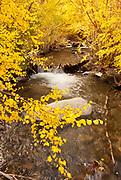 Aspen over Convict Creek, Eastern Sierra Nevada, Inyo National forest, California