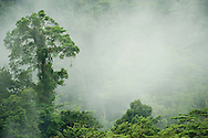 Forest carbon pic -- Powerpoint-ready!