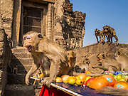30 NOVEMBER 2014 - LOPBURI, LOPBURI, THAILAND: A juvenile long tailed macaque monkey screams to keep other juvenile monkeys away from its food at the monkey buffet party in Lopburi. Lopburi is the capital of Lopburi province and is about 180 kilometers from Bangkok. Lopburi is home to thousands of Long Tailed Macaque monkeys. A regular sized adult is 38 to 55cm long and its tail is typically 40 to 65cm. Male macaques weigh around 5 to 9 kilos, females weigh approximately 3 to 6 kg. The Monkey Buffet was started in the 1980s by a local business man who owned a hotel and wanted to attract visitors to the provincial town. The annual event draws thousands of tourists to the town.    PHOTO BY JACK KURTZ