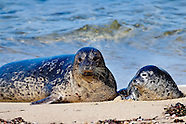 Wildlife - Seal