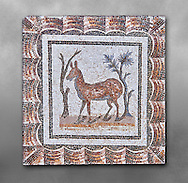 3rd century AD Roman mosaic depiction of two deer between two shrubs. Thysdrus (El Jem), Tunisia.  The Bardo Museum, Tunis, Tunisia. Grey background .<br /> <br /> If you prefer to buy from our ALAMY PHOTO LIBRARY  Collection visit : https://www.alamy.com/portfolio/paul-williams-funkystock/roman-mosaic.html - Type -   Bardo    - into the LOWER SEARCH WITHIN GALLERY box. Refine search by adding background colour, place, museum etc<br /> <br /> Visit our ROMAN MOSAIC PHOTO COLLECTIONS for more photos to download  as wall art prints https://funkystock.photoshelter.com/gallery-collection/Roman-Mosaics-Art-Pictures-Images/C0000LcfNel7FpLI