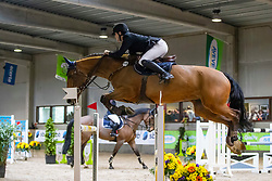 Geerts Jeroen, BEL, Japrilli H<br /> Klasse Zwaar<br /> Nationaal Indoor Kampioenschap Pony's LRV <br /> Oud Heverlee 2019<br /> © Hippo Foto - Dirk Caremans<br /> 09/03/2019