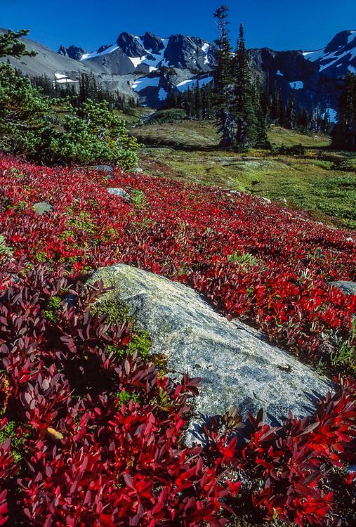 Cameron Basin, September, Olympic National Park, Washington, USA