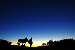 Gaúcho e seus cavalos na fazenda Santa Helena, em Encruzilhada do Sul. FOTO: Jefferson Bernardes / Preview.com