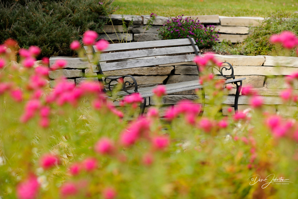 Red asters and garden bench, Greater Sudbury, Ontario, Canada