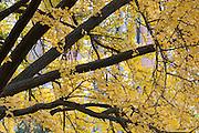USA, Massachusetts, Boston. Boston Public Garden in autumn
