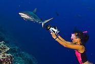 Yap Vertigo Reef Free Diving Sharks