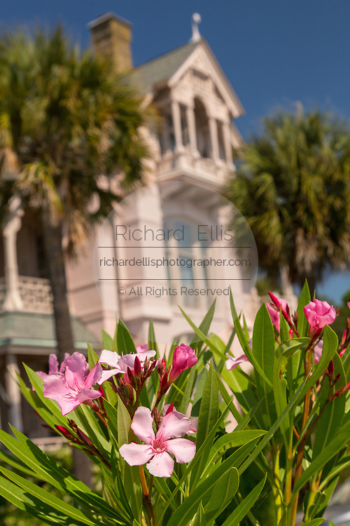 Oleander blooms at the Charles Drayton House on East Battery in historic Charleston, SC.