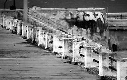 Gabbiani appollaiati sulla balaustra di un edificio sul porto di Gallipoli (LE), Italia