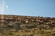 A Palestinian shepherd with his herd of sheep in the Jordan River Valley, The Jordan Rift Valley, also Jordan Valley also called the Syro-African Depression, is an elongated depression located in modern-day Israel, Jordan, and Palestine. This geographic region includes the entire length of the Jordan River – from its sources, through the Hula Valley, the Korazim block, the Sea of Galilee, the (Lower) Jordan Valley, all the way to the Dead Sea,